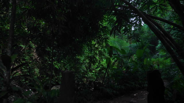 Walking hiking along tropical forest in Bali jungle video