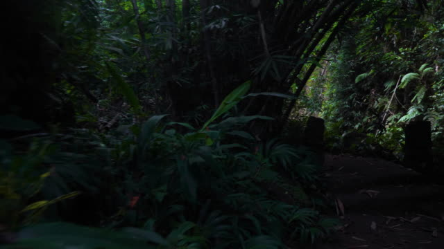Walking hiking along tropical forest in Bali jungle - video