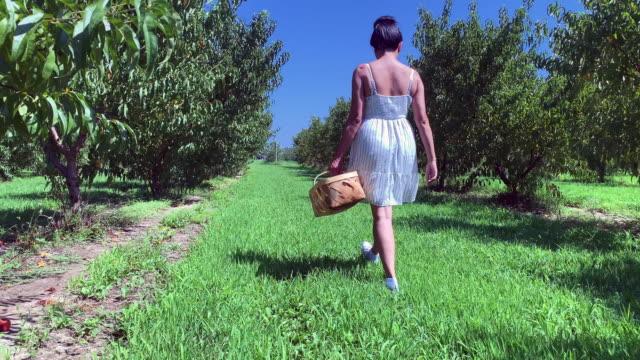 walking in an orchard - attività agricola video stock e b–roll
