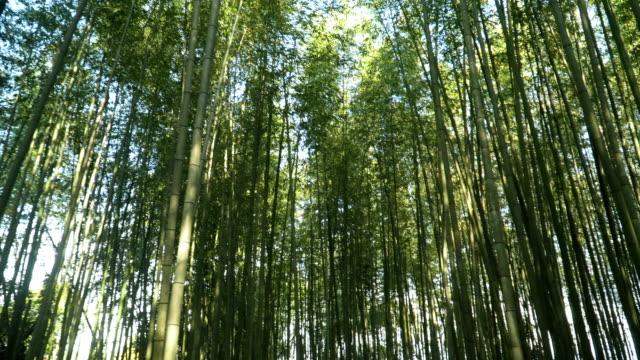 walking in Arashiyama Bamboo Forest in Kyoto, Japan video