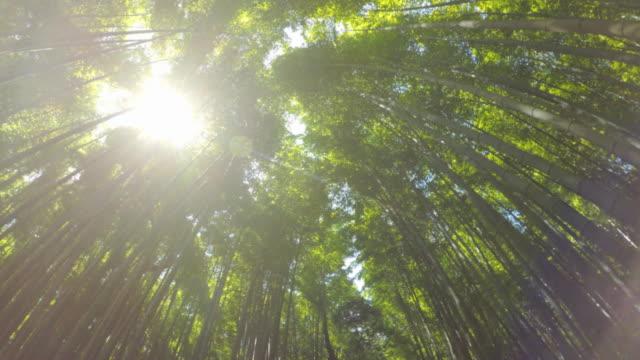 Walking in Arashiyama Bamboo Forest