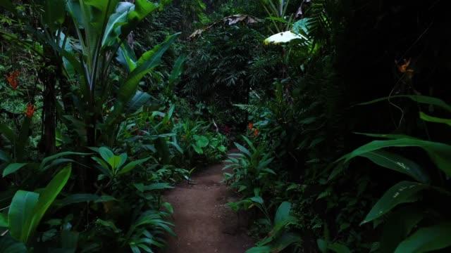 vidéos et rushes de marcher dans la jungle de bali - forêt tropicale humide