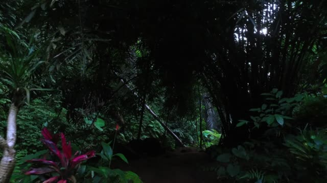 Walking in Bali jungle - video