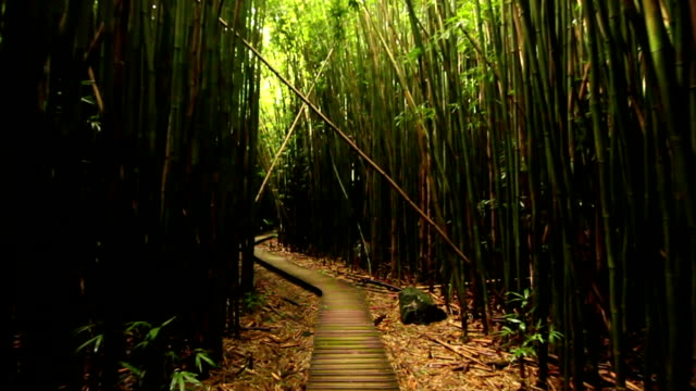 Walking In Bamboo Forest, Steadicam Shot (HD) video
