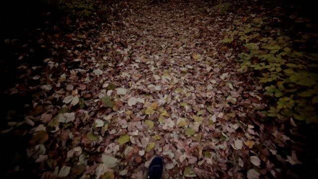 pov cammina nella foresta - ghiaia video stock e b–roll