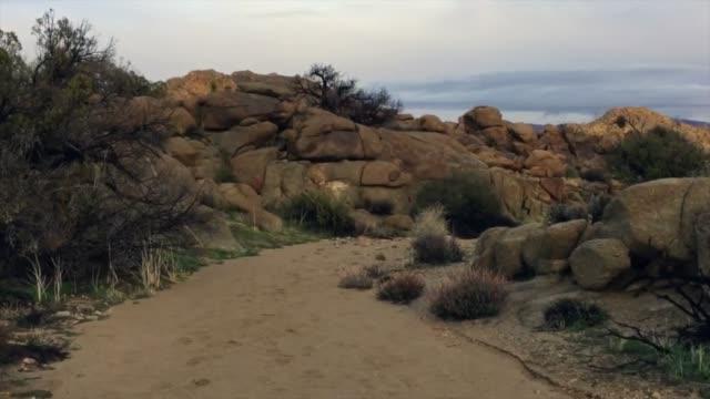 povジョシュア ツリー公園を歩いて - ジョシュアツリー国立公園点の映像素材/bロール