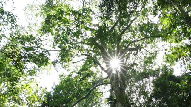 森を歩いています。 - 木漏れ日点の映像素材/bロール
