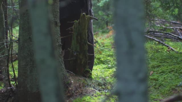 vídeos y material grabado en eventos de stock de caminar por el bosque - árboles genealógicos