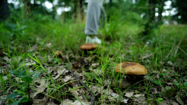 Walking in the nature by the mushrooms