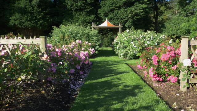 夏のバラ園を歩く - 花壇点の映像素材/bロール