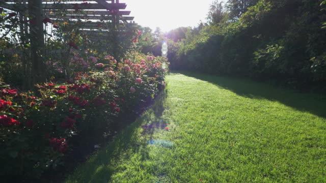 walking in the summer rose garden video