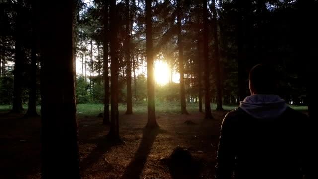 vídeos de stock, filmes e b-roll de caminhada na floresta, na direção de sol - wood