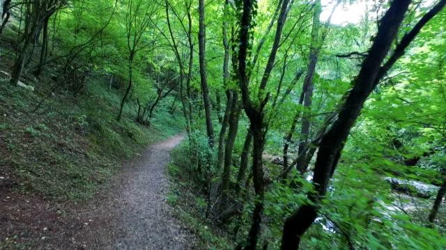 Spacery w lesie, na słońcu – film