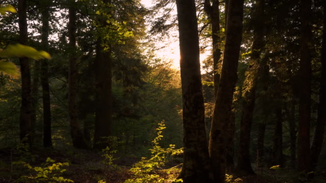 walking into the woods with beautiful sun flares - albero caduto video stock e b–roll