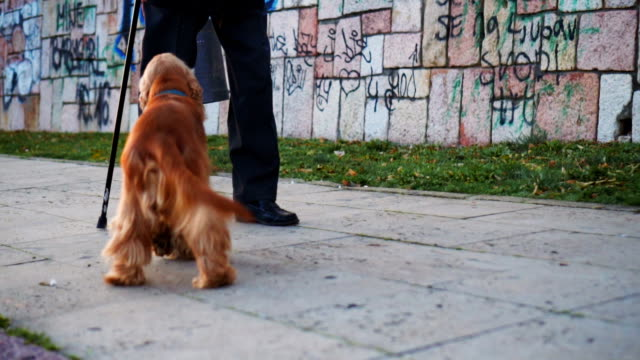 Walking is easier when you have good company video