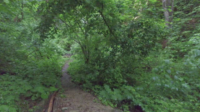 walking on a forest path. - forest bathing video stock e b–roll