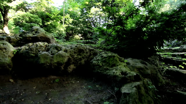 Walking on a path in the forest, steady cam shot. video