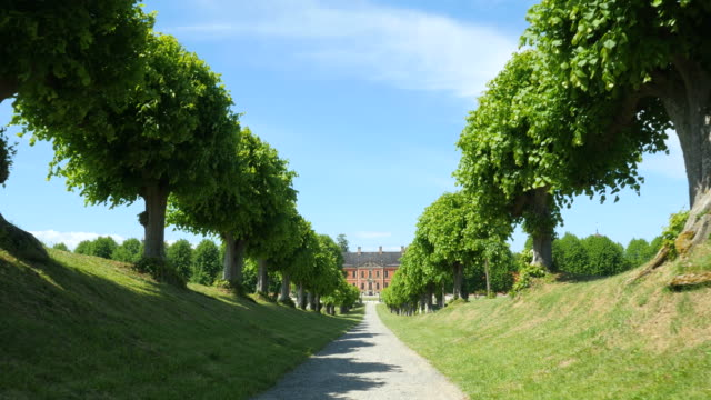 Walking on an avenue with trees towards bothmer castle