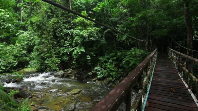vidéos et rushes de deux sur le pont dans la forêt. - paysage extrême