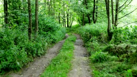 Walking On Forest Trail Perspective of walking on a path in the forest extreme terrain stock videos & royalty-free footage