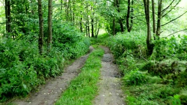 vídeos y material grabado en eventos de stock de sendero para caminatas en bosque - terreno extremo