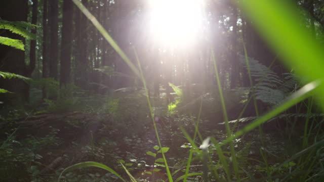 slow motion: cammina nella foresta di sole terra - farfalla ramo video stock e b–roll