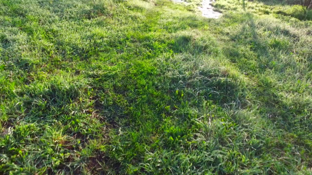 Walking on wet grass. Verdure Meadow with grass. Stream of clean water. Morning. video