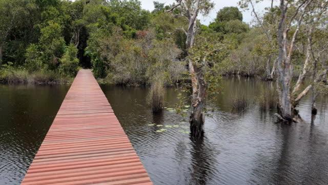 Walking on wooden bridge in wetland.