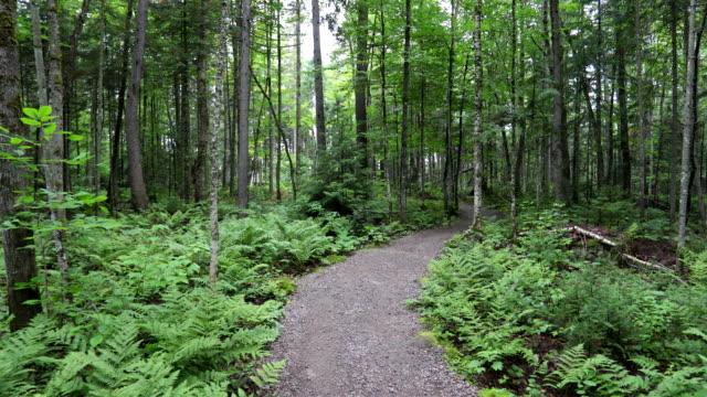 vídeos de stock e filmes b-roll de pov walking or hiking in the forest in summer - budismo