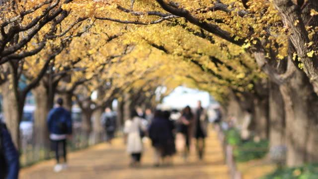 Wanderer an der Ginkgo-Straße in Tokio im Herbst – Video