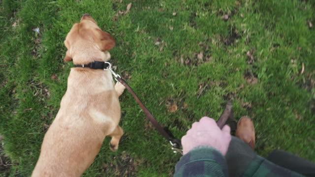Walking the dog video