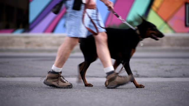 spaziergänge mit dem hund - hundesitter stock-videos und b-roll-filmmaterial