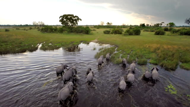 walking though african waters - wildlife travel stock videos and b-roll footage