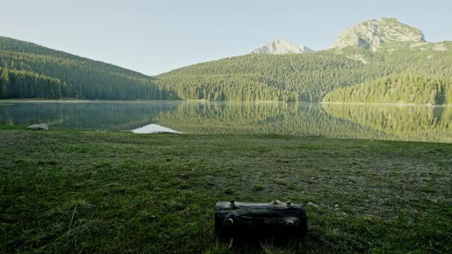 Walking through a dense fir forest towards a lake