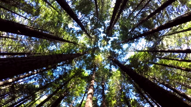 Walking through a forest or park looking up