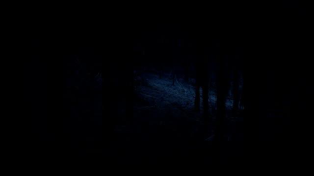 promenader genom läskiga skogen i mörkret - liten skog bildbanksvideor och videomaterial från bakom kulisserna