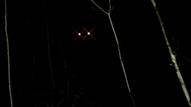 POV walking through dark spooky forest at night towards lights Escaping from monsters or other scary stuff through the forest, with tree branches all around. Someone is chasing you and wants to eat you. flashlight stock videos & royalty-free footage