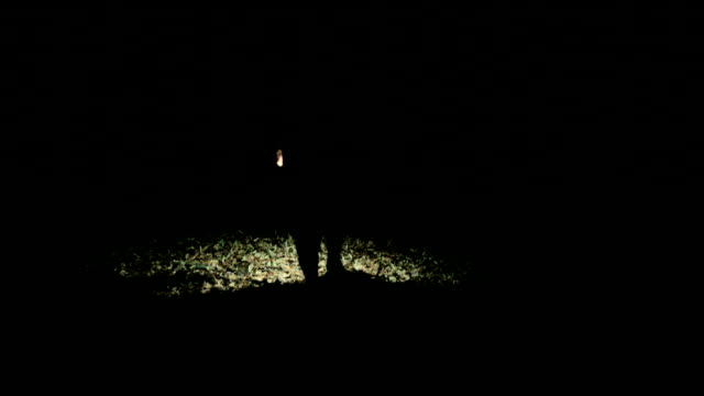 Walking through forest searching with flashlight Man searching through woods with light, trying to find someone or something. lantern stock videos & royalty-free footage