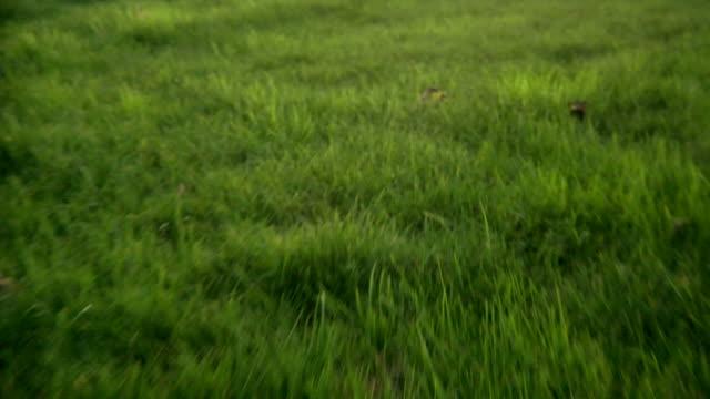 HD POV walking through long grass video