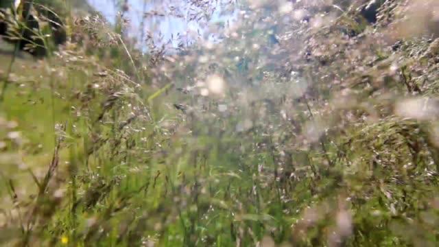 Walking through the fields video