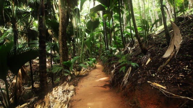 Walking through the tropical forest