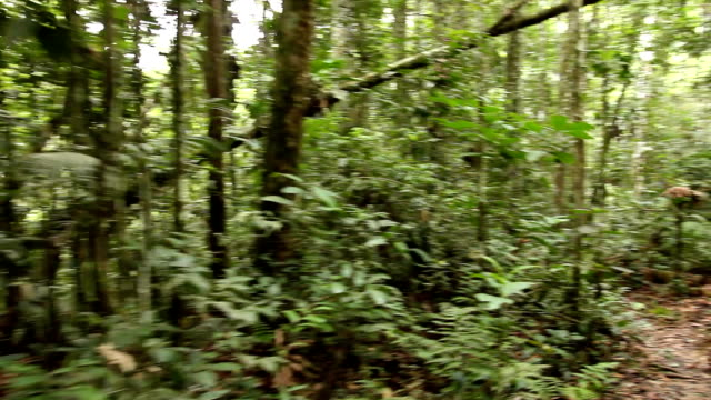 Walking through tropical rainforest video
