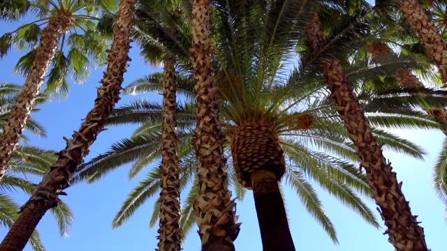 walking under palm trees in slow motion - palm tree filmów i materiałów b-roll