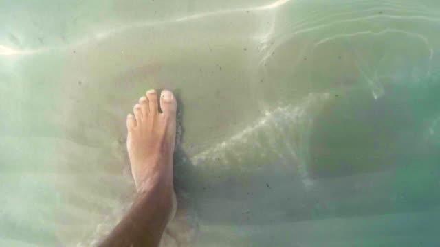 piedi subacqueo - arto inferiore animale video stock e b–roll