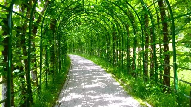 kameradan ile yeşil yeşillik tünel için yürüme. - fantastik stok videoları ve detay görüntü çekimi