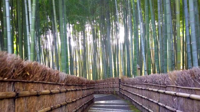 vídeos de stock e filmes b-roll de walkway bamboo tunnel named arashiyama bamboo forest in kyoto, tourist landmark of japan - cidade de quioto