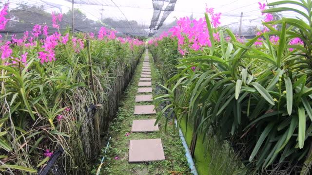 Walkway in orchid garden bangkok Thailand Walkway in orchid garden bangkok Thailand plant nursery stock videos & royalty-free footage