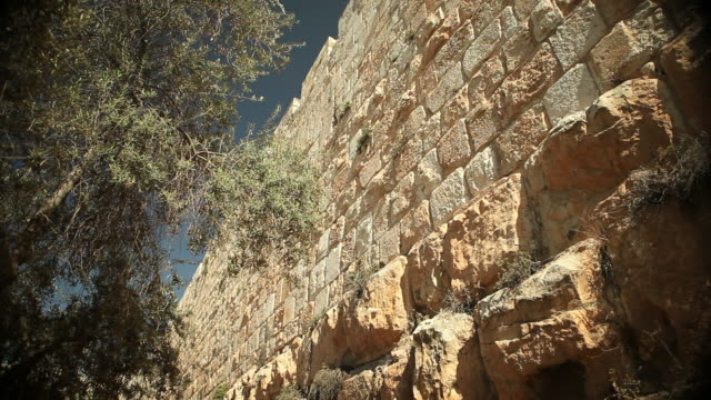 Wall of Jerusalem with Olive Tree video