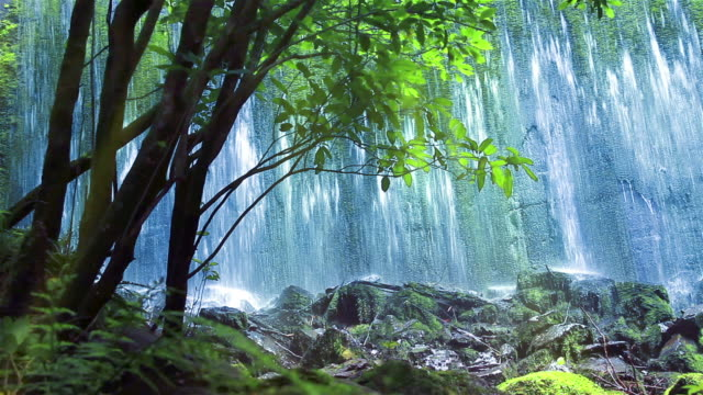 Wall of water from old dam, viewed through backlit forest video