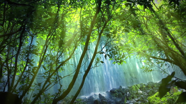 Wall of water from old dam, viewed through sunlit forest video